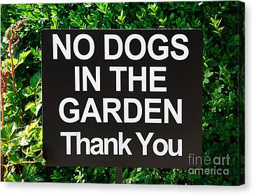 No Dogs In The Garden Thank You Canvas Print by Andee Design