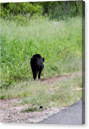 No Picture Today Said The Boar Canvas Print