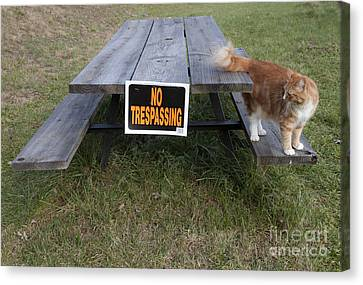 Canvas Print featuring the photograph No Trespassing by Jeannette Hunt