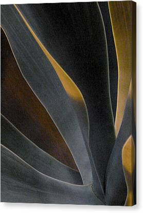 Nocturnal Interludes 'round Midnight 5 Canvas Print