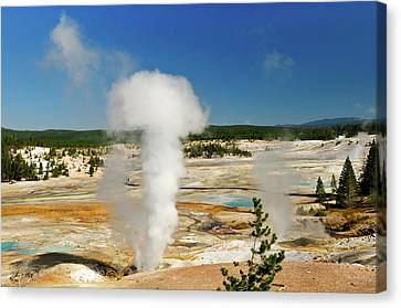 Norris Geyser Canvas Print by Greg Norrell