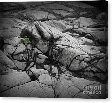 North Shore Fern Canvas Print by Perry Webster