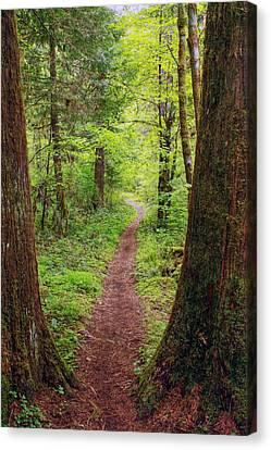 Canvas Print featuring the photograph North Umpqua Trail by Tyra  OBryant