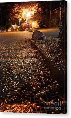 Northampton's Autumn Leaves At Night Canvas Print