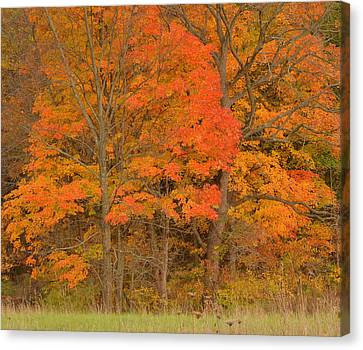 Northeast Fall Colors Canvas Print by Stephen  Vecchiotti