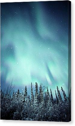 Northern Lights Over Snow Covered Canvas Print by Robert Postma
