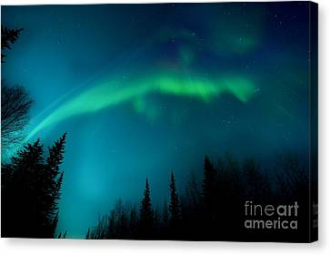 Northern Magic Canvas Print