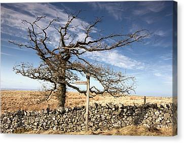 Northumberland, England A Leafless Tree Canvas Print by John Short