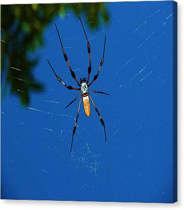 Canvas Print featuring the photograph Not-so Itsy-bitsy Spider by Joy Braverman