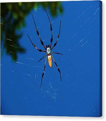 Not-so Itsy-bitsy Spider Canvas Print