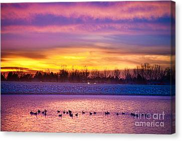 November Lagerman Reservoir Sunrise  Canvas Print by James BO  Insogna