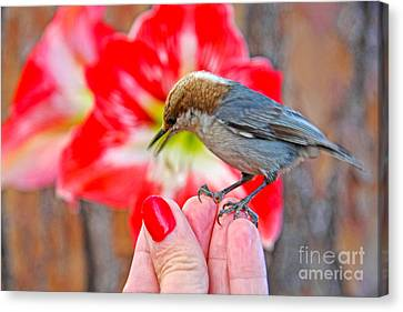 Canvas Print featuring the photograph Nuthatch Bird Friend by Luana K Perez