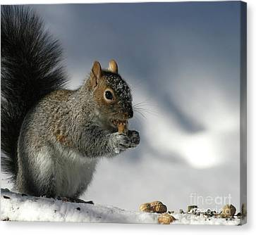 Nutty About Winter Canvas Print