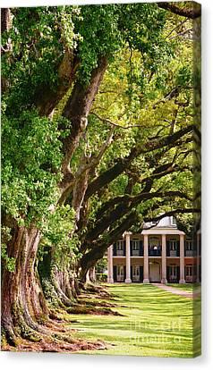 Oak Alley Trees Canvas Print by Jeanne  Woods