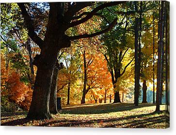 Canvas Print featuring the photograph Oak In Autum Woods by Peg Toliver