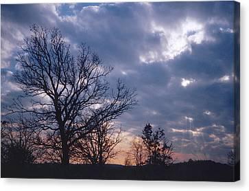 Oak In Sunset Canvas Print