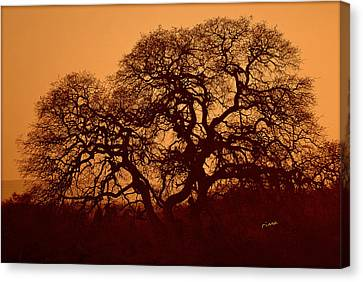Canvas Print featuring the photograph Oak Tree At Sunset by Rima Biswas