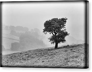 Canvas Print featuring the photograph Oak Tree In The Mist. by Clare Bambers