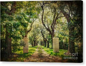 Oak Tree Lined Drive Canvas Print by Joan McCool