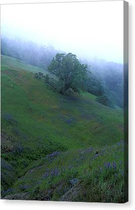 Oak With Lupine In Fog Canvas Print by Kathy Yates