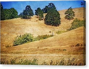 Oaks On Grassy Hill Canvas Print by Bonnie Bruno