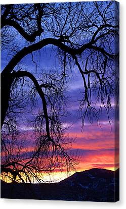 Canvas Print featuring the photograph Obeisance by Jim Garrison