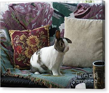 Obelix The Rabbit  Canvas Print by Vicky Tarcau