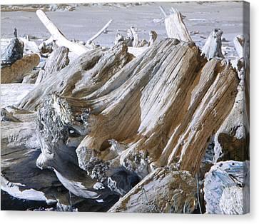 Ocean Driftwood Landscape Art Prints Coastal Views Canvas Print by Baslee Troutman
