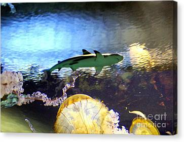 Ocean Encounter Canvas Print by Kevin Moore
