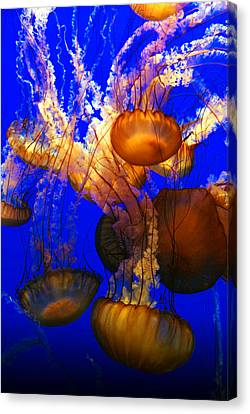 Ocean Jellyfish Canvas Print by Anthony Citro