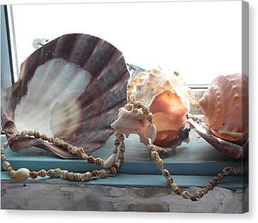 Ocean Treasures Canvas Print by Amy Bradley