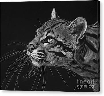 Ocelot Canvas Print by Sheryl Unwin
