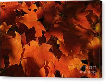 October Glow Canvas Print by Luke Moore