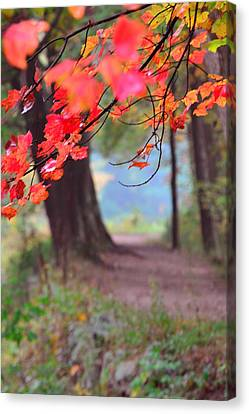 October Walk Canvas Print by Mandi Howard