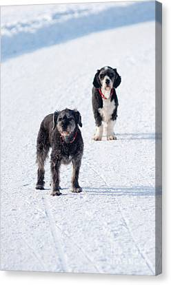 Canvas Print featuring the photograph Odd Couple by Andrew  Michael