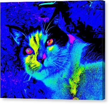 Oden Oreo Canvas Print by Julie Hiskett