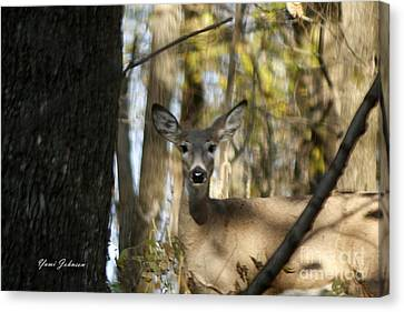 Canvas Print featuring the photograph Oh Deer by Yumi Johnson