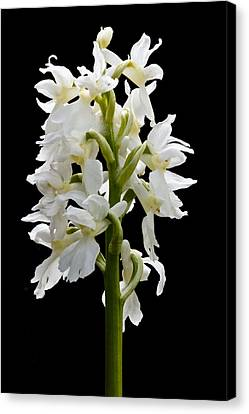 Canvas Print featuring the photograph O'kelly's Spotted Orchid by Rob Hemphill