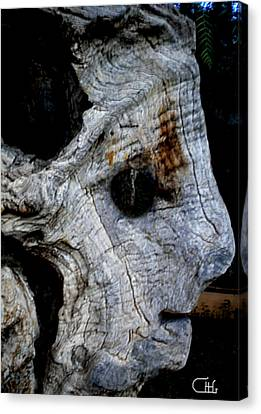 Old Ancient Olive Tree In Spain Canvas Print by Colette V Hera  Guggenheim