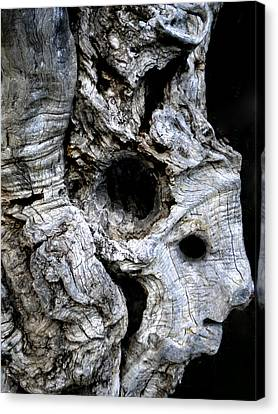 Old Ancient Olive Tree Spain Canvas Print by Colette V Hera  Guggenheim