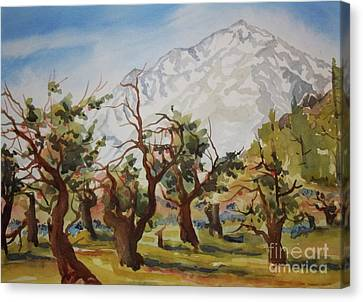 Old Apple Orchard Mt Tom View Canvas Print by Pat Crowther
