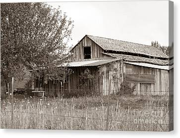 Old Barn In Sepia  Canvas Print by Connie Fox