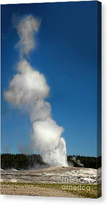 Old Faithful Eruption Canvas Print by Gregory Dyer