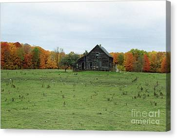 Old Homestead Canvas Print by David Murray