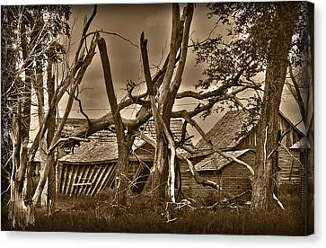 Old Homestead Canvas Print by Shane Bechler