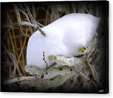 Canvas Print featuring the photograph Old Man Winter's Hand by Michelle Frizzell-Thompson