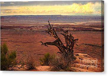 Old One Canvas Print by Robert Bales
