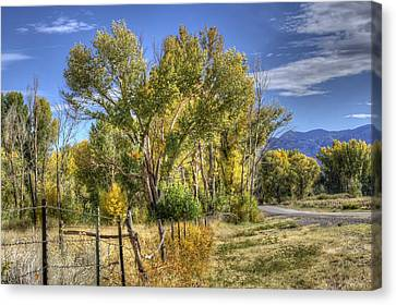 Old Ranch Near Bishop Canvas Print by Michele Cornelius