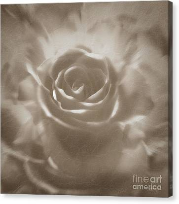 Canvas Print featuring the digital art Old Rose by Johnny Hildingsson