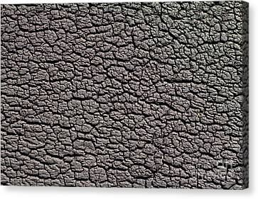Canvas Print featuring the photograph Old Rubber Tire Surface  by Les Palenik